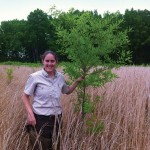 Planting trees to offset carbon emmissions
