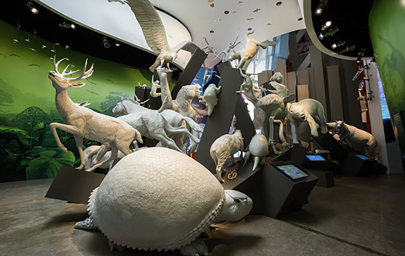 Worlds Collide exhibition, Biomuseo, evoking the closure of the Isthmus of Panama, which generated a great exchange of species between North and South America, two land masses that had been separated for 70 million years (Panama City, Panama, 2002ñ14). In collaboration with the Smithsonian Tropical Research Institute, the University of Panama, and Gehry Partners. Photo: Courtesy of Fernando Alda